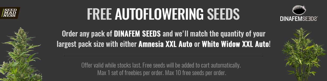 Dinafem Seeds Promo